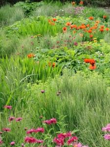 Flowers at Richmond Castle - England 2011